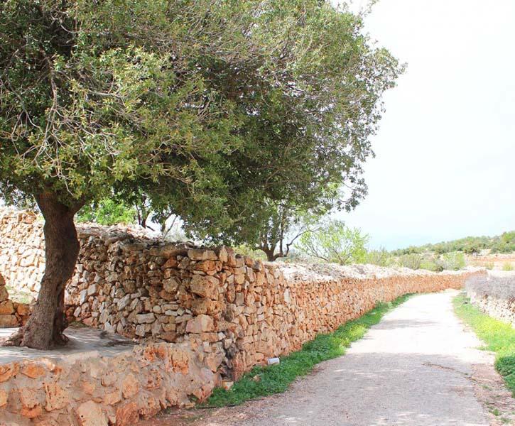 Jordan Trail | 201- Ajloun Castle to Khirbet Al-Souq